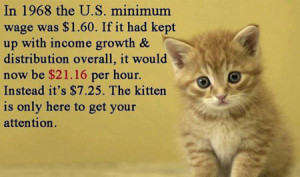 Minimum Wage Kitten